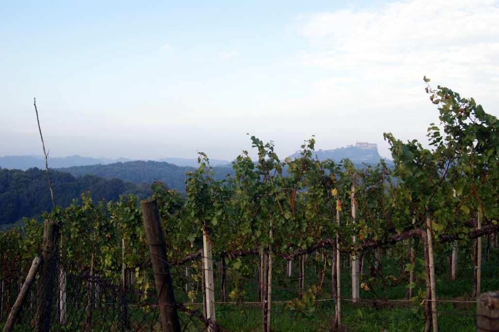Wein und Riegersburg